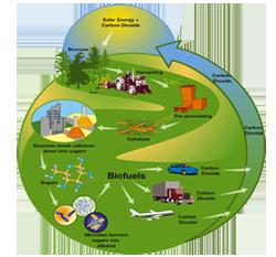 Βιοκαύσιμα από βιολογικές πρώτες ύλες